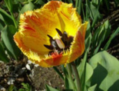 Una flor de mayo para María