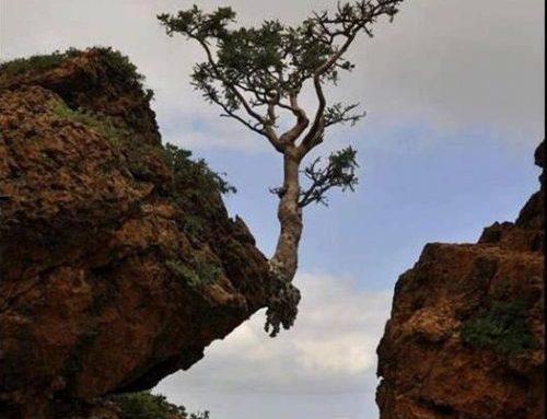 Vivir en fe vacía, libre y confiada