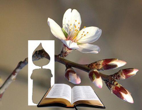 Evangelio diario - Pascua A