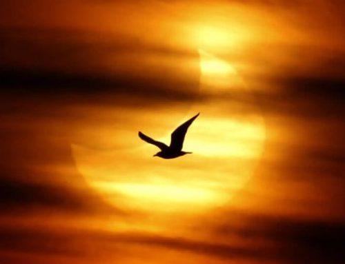 Silencio y soledad en la mística sanjuanista
