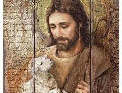 Yo doy mi vida por las ovejas. Experiencia de lectio divina
