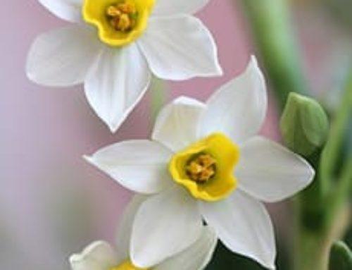Vídeos orantes: Oración en el IV Domingo de Pascua